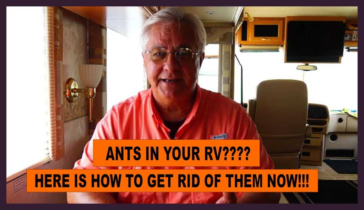 How to get rid of RV ants