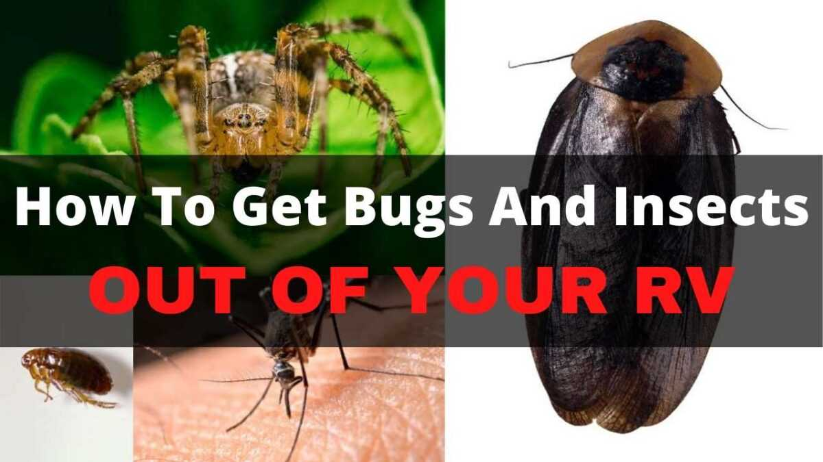 RV Bugs And Insects – How To Get Rid Of Them For Good
