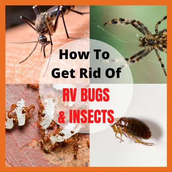 How to get rid of RV bugs and insects